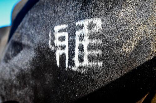 Nos fermes, Miyabi Groupe l'excellence du boeuf wagyu
